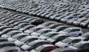 Σημαντική αύξηση τον Μάιο 2019 στις νέες ταξινομήσεις αυτοκινήτων