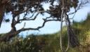 Χανιά: Τουρίστας βρήκε απαγχονισμένο άνδρα σε δέντρο στο Ελαφονήσι