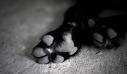 Έξι μήνες φυλάκιση για άνδρα που σκότωσε σκύλο στη Γαλλία