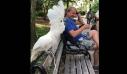Παπαγάλος τρολάρει σκύλο
