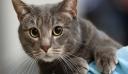 Απίστευτη τραγωδία: Πώς μια γάτα σκότωσε ένα μωρό