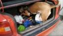 Η στιγμή που η Minnie βρίσκει ηρωίνη στο αυτοκίνητο 67χρονου στο Κιλκίς (βίντεο)