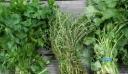 Το ελληνικό βότανο που προστατεύει από καρκίνο και διαβήτη