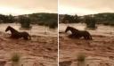 Συγκλονιστικό βίντεο: Άλογο παλεύει με χείμαρρο στη Μάνδρα και βγαίνει ζωντανό