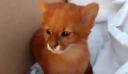 Έφηβη υιοθέτησε αδέσποτο γατάκι και ανακάλυψε πως τελικά ήταν ιαγουαρόντι [Βίντεο]