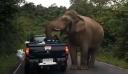 Ελέφαντας κάνει επιδρομή σε φορτηγάκι ψάχνοντας για φαγητό [Βίντεο]
