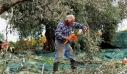 Αραχωβίτης: Αποζημιώσεις από το τέλος του χρόνου στους πληγέντες από το χαλάζι