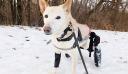 Παράτησαν σκυλίτσα με αναπηρία στο δρόμο, με σπασμένο καρότσι, δεμένη με αλυσίδα [φωτο +βίντεο]
