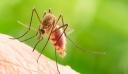 ΚΕΕΛΠΝΟ: Ο ιός του Δυτικού Νείλου έχει μολύνει 28.000 ανθρώπους