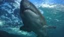 Κόρινθος: Καρχαρίας ξεβράστηκε σε παραλία της Ποσειδωνίας [φωτο+βίντεο]