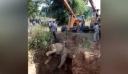Δείτε τη συγκλονιστική 36ωρη διάσωση παγιδευμένου ελεφάντα μέσα σε πηγάδι [βίντεο]