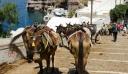 Σαντορίνη: Οι υπέρβαροι τουρίστες δεν θα ανεβαίνουν πια στα γαϊδουράκια