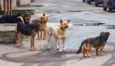 Ξάνθη: Μέσα σε μία εβδομάδα εγκαταλείφθηκαν 50 σκυλιά στο δρόμο