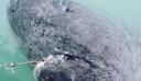 Ψάρεψαν το γηραιότερο πλάσμα στη Γη: Εναν καρχαρία που γεννήθηκε το… 1505! [Εικόνες]