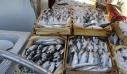 Ηράκλειο: Κατασχέθηκαν πάνω από 21 τόνοι ψάρια