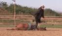 Άλογο προσποιείται ότι πεθαίνει για να μην το καβαλήσουν