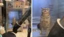 Γάτα βιώνει την απόλυτη απόλαυση σε αυτόματο στεγνωτήριο κατοικίδιων