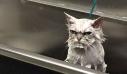 Απίστευτες φωτογραφίες με οργισμένα ζωάκια – Θα ξεκαρδιστείτε (εικόνες)