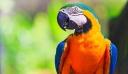 O παπαγάλος «μάρτυρας» σε βιασμό και δολοφονία – Άκουσε τα τελευταία λόγια του θύματος