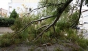 Τραγωδία στην Εύβοια: Δέντρο καταπλάκωσε και σκότωσε πυροσβέστη