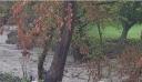 Κακοκαιρία στην Εύβοια: Έντονη βροχή στον Δήμο Μαντουδίου Λίμνης Αγίας Άννας – Έκκληση στους κατοίκους από τον δήμαρχο