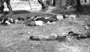 Χανιά : Αναγνωρίστηκε ως μαρτυρικό το χωριό Κοντομαρί