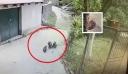 ΑΠΙΣΤΕΥΤΟ: Αρκουδάκια εισέβαλαν σε αποθήκη και ήπιαν όλο το κρασί και το τσίπουρο [Βίντεο]