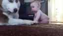 Η αντίδραση ενός Χάσκι στον χαιρετισμό του μωρού; Θα σας κάνει να λιώσετε [Βίντεο]