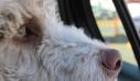 Άφησε τον σκύλο του κλειδωμένο στο αυτοκίνητο και πέθανε από τη ζέστη