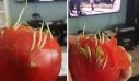 ΑΠΙΣΤΕΥΤΟ! Δείτε Τι Συμβαίνει 'Οταν τα Φρούτα και τα Λαχανικά Αρχίζουν να Φυτρώνουν πρόωρα!
