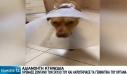 Συγκινεί η εικόνα του σκύλου που έζησε τη φρίκη στα Χανιά – Πατέρας τριών παιδιών ο δράστης, περιμένει και δίδυμα