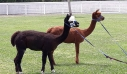 Markopoulo Park: Το παιχνίδι του Γκανιάν «απογείωσε» το ενδιαφέρον και τα κέρδη