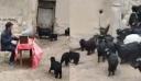 Kτηνοτρόφος έκανε «συνέλευση» με τις κατσίκες του για να… αυξηθούν τα κέρδη του κοπαδιού [Βίντεο]