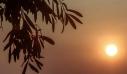 Δραματική η μείωση της παραγωγής ελαιόλαδου στην Κρήτη