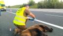 Θανατηφόρο τροχαίο με θύμα νεαρή αρκούδα στην Εγνατία Οδό