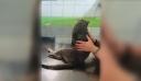 Λαμία: Δεν άντεξε ο γατούλης που πυροβολήθηκε από λυκειάρχη