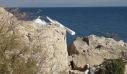 Άγνωστοι κατέστρεψαν τον μεγάλο σταυρό που είχε τοποθετηθεί στην ακτή Απελή στη Μυτιλήνη