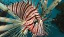 Νέο δηλητηριώδες ψάρι έκανε την εμφάνισή του στην Κρήτη [φωτο]
