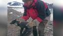 Το απίστευτο ταξίδι μιας αλεπουδίτσας από τη Νορβηγία στον Καναδά σε 76 μέρες
