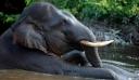 Επιχείρηση 12 ωρών στην Ινδία για τη διάσωση ελέφαντα που είχε πέσει σε πηγάδι
