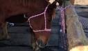 Το άλογο… Χουντίνι