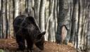 Θεσσαλονίκη: Άγρια ζώα θα εξακολουθήσει να φιλοξενεί ο Ζωολογικός Κήπος