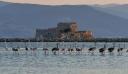 Γέμισε με φλαμίνγκο το Ναύπλιο! (εικόνες)