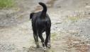 Ασυνείδητος πυροβόλησε αδέσποτο σκυλάκι στις Σέρρες