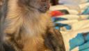 Πένθος στο TikTok για την αγαπημένη μαϊμού με τους εκατομμύρια ακολούθους που έφυγε από τη ζωή