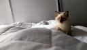 Αυτό το γατάκι, είναι το πιο… γλυκό ξυπνητήρι που έχεις δει ποτέ! [Βίντεο]