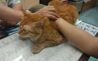 Κι όμως αυτή η γάτα εργάζεται σε κλινική