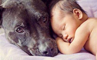 Μικρά παιδιά, μεγάλοι σκύλοι