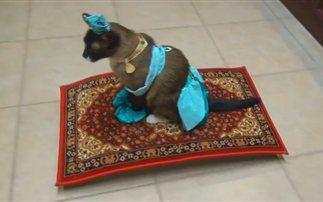 Η γάτα του Αλαντίν