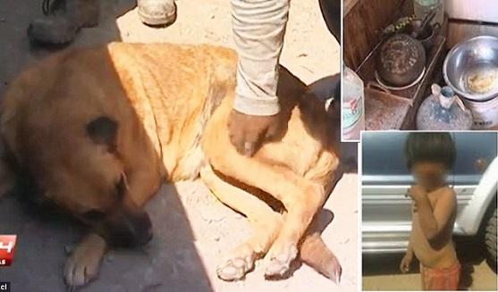 ΑΠΙΣΤΕΥΤΟ!! Σκυλίτσα έσωσε 2χρονο εγκαταλελειμμένο αγοράκι θηλάζοντας το!! (Pics)